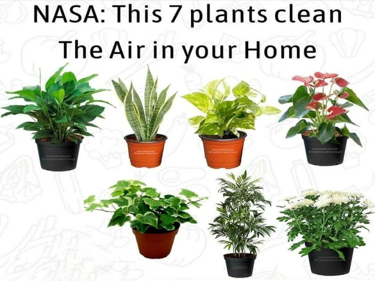 NASA: 7 Plants That Clean The Air In Your Home.