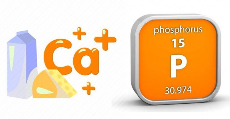 Calcium and Phosphorus: Functions, Food sources, Absorption and utilisation