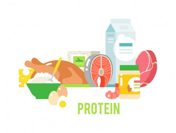Proteins: Food Sources, Functions, Digestion, Absorption and Utilization
