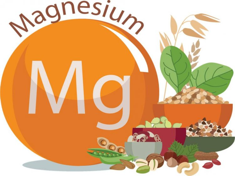 Magnesium: Functions, Food sources, Absorption and excretion